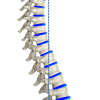 Ideal spine